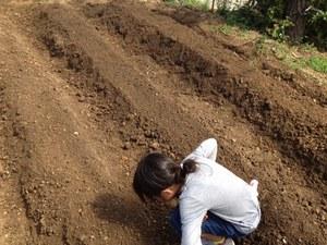 畝作り.JPG