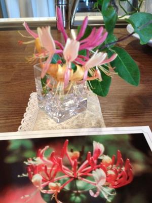 ハニーサックルお花.JPGのサムネイル画像