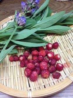 2014野イチゴ収穫.JPGのサムネイル画像