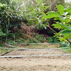 秋植え畑.JPG