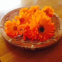 花壇のカレンデュラ2.JPGのサムネイル画像